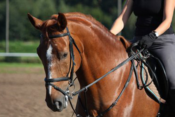 Equine Business Law