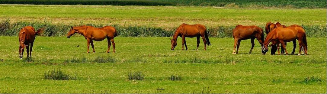 LAND AS AN ASSET OF A HORSE BUSINESS